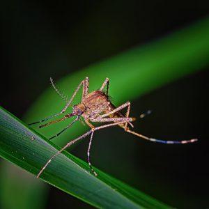 Quelques solution pour éloigner les moustiques de chez vous