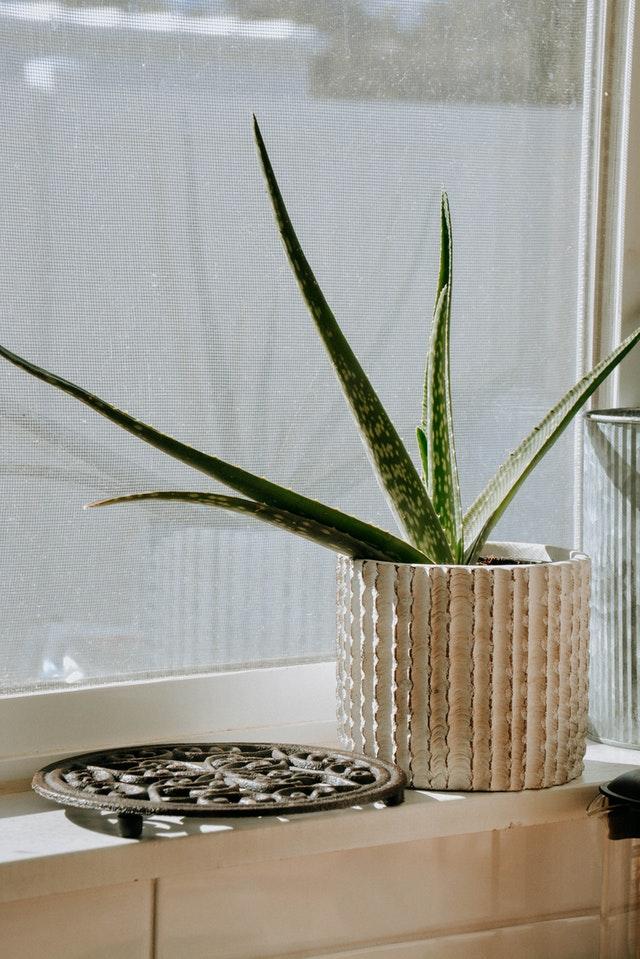 plante d'interieure