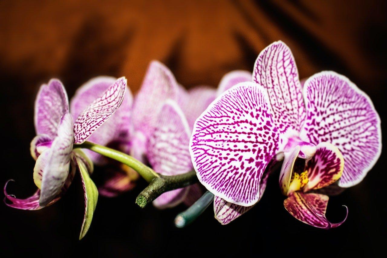 Les plantes pour la décoration intérieure